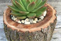 my tuin