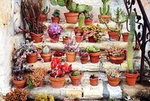 succulents / Resilient and healing plants, we can learn a lot from these powerful little plants.