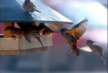Madarak madáretető
