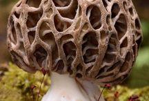 I'll start with mushrooms