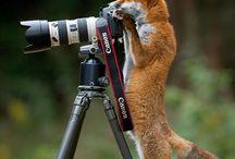Naturbilder / Fotografier fra natur, fugle- og dyreliv.