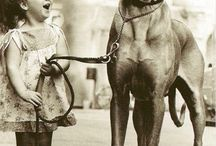 Great dane, great heart. / Great danes are big and totally unaware of their size and possibility :)