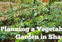Gardening / by Karen Leader
