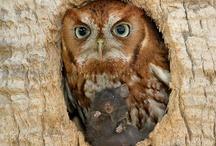 owls love <3
