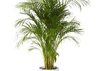 växter och uterum