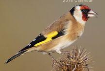 2015 Garden Birds Calendar / by MegaCalendars.com