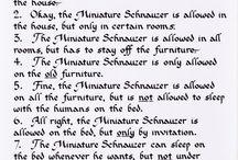 I love my schnauzer♡