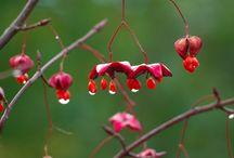 Blomster/tre