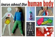 menslike liggaam