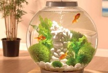 Aquariums / by Lorena Landry