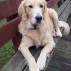 Great Doggie Stories with Happy Endings / by Melinda Bartoszewicz