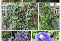 puutarha kukat-my plants