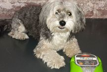 Snap&Feed dogs / Photos of dogs using and enjoying our bowl holders for dogfood