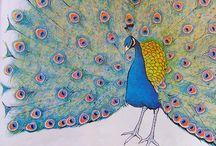 peacock / by Diane Reid