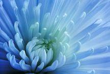 le bleu / protection, loyauté, corporate