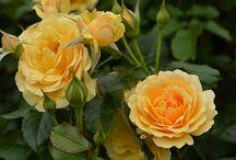 Růže a spol.