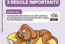 consigli per prendersi cura del cane