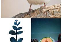 Art, Photography & Decorative Ideas