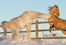 Horse behaviours
