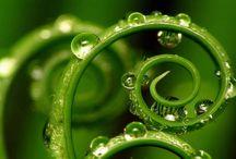 kouzlo přírody - zelená