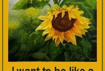 floarea soarelu