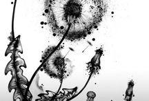 Dandelions,poppyheads, seed heads