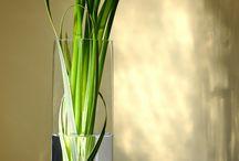 Flowers  / by Heidi Swenson- Wis