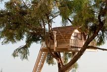 Tree-houses casa sull'albero