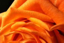 Knal oranje