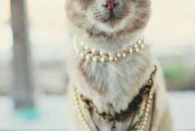 Cats / pisicute
