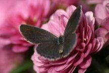 dieren / vlinders