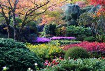 G:  world garden
