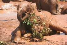 African Wildlife / Beautiful photos of African Wildlife