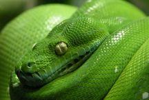 reptielen  / hier zijn allemaal foto's van reptielen