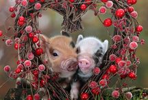 cute pics