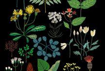 Illustrated garden