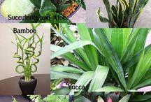 Plants and Gardening / Indoor and outdoor