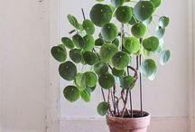 Les plantes pour décorer sa maison / Idées de plantes pour décorer sa maison.