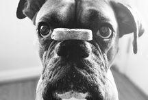 El eterno cachorro