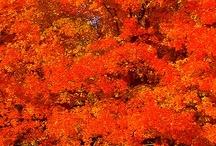 Autumn colors / by Susan Brouillette