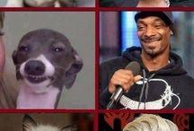 Look-alikes