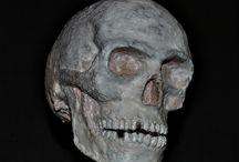 Skull (?)