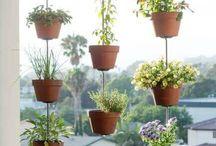 Parvekkeen kasvit