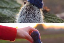 HEDGEHOGS and other cute animals....  / by Kaitlynn Olivas