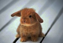 Cute Things AND Pictures of Bunnies!  / Just pictures of cute things and bunnies - nothing more nothing less