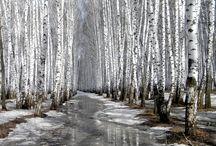 Landscape Photography / Favourites #Landscape and #Nature #Photography