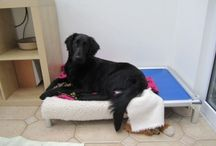 Flat Coated Retriever  / Flat Coated Retrievers on their Kuranda bed! / by Kuranda Dog Beds