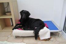 Flat Coated Retriever / Celebrating flat coated retrievers / by Kuranda Dog Beds