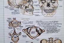 anatomi, fysiologi