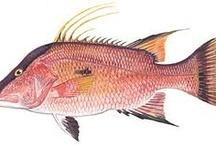 fishy paintings